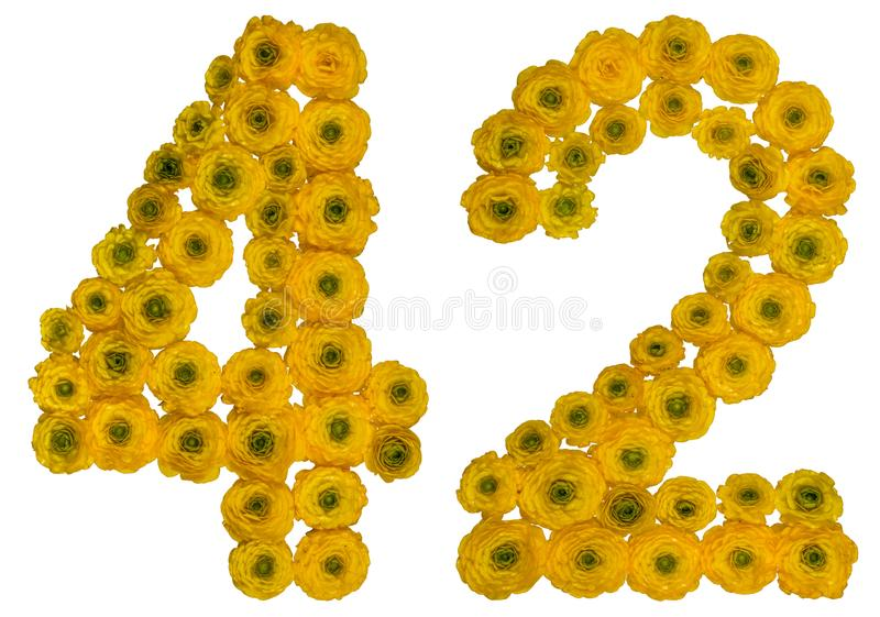 Arabic numeral 42, forty two, from yellow flowers of buttercup,. Isolated on white background royalty free stock photos