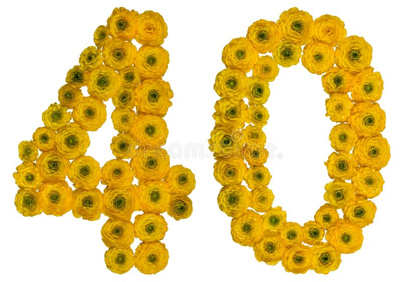 Arabic numeral 40, forty, from yellow flowers of buttercup, isolated on white background royalty free stock images