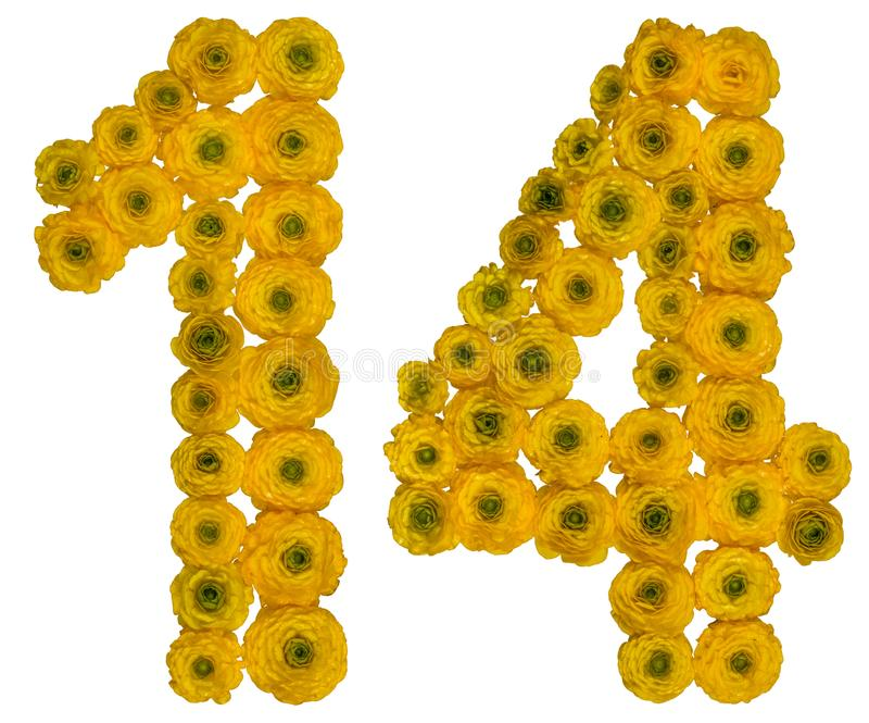 Arabic numeral 14, fourteen, from yellow flowers of buttercup,. Isolated on white background stock photos