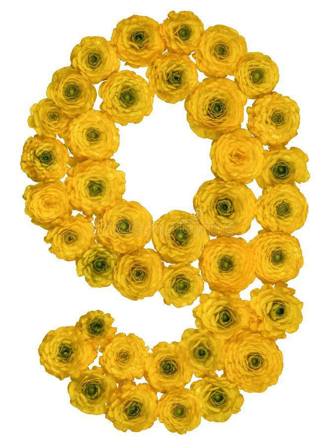 Arabic numeral 9, nine, from yellow flowers of buttercup, isolated on white background royalty free stock photo