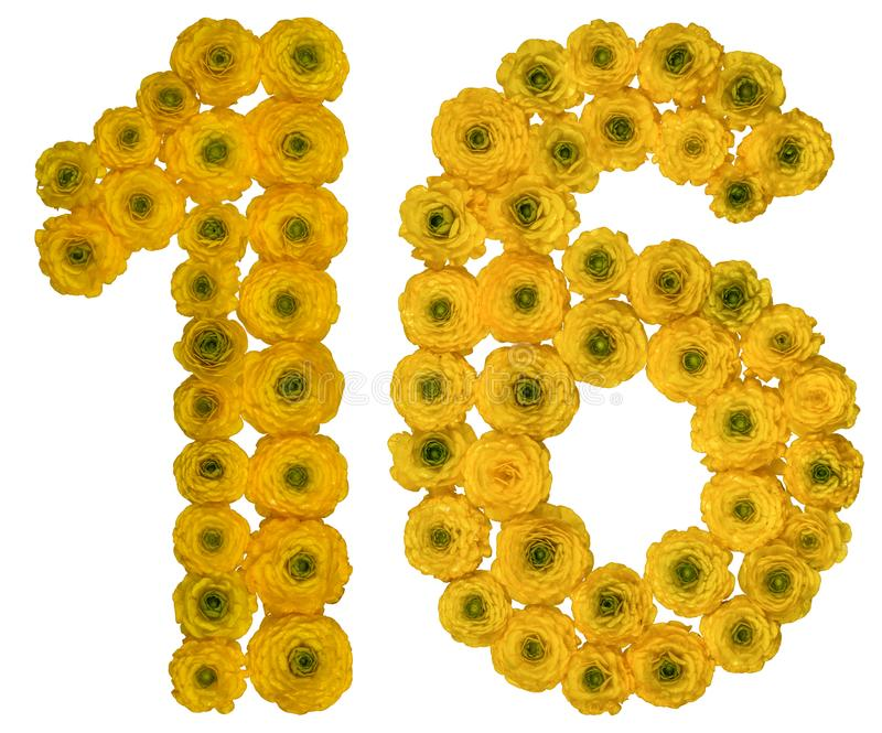 Arabic numeral 16, sixteen, from yellow flowers of buttercup, i. Solated on white background stock image