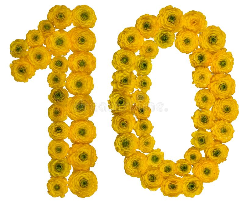 Arabic numeral 10, ten, from yellow flowers of buttercup, isola. Ted on white background stock image