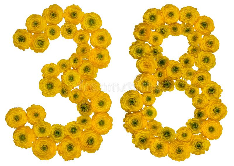 Arabic numeral 38, thirty eight, from yellow flowers of buttercup, isolated on white background royalty free stock images