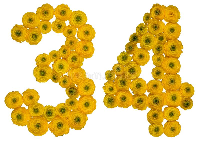 Arabic numeral 34, thirty four, from yellow flowers of buttercup. Isolated on white background stock photography