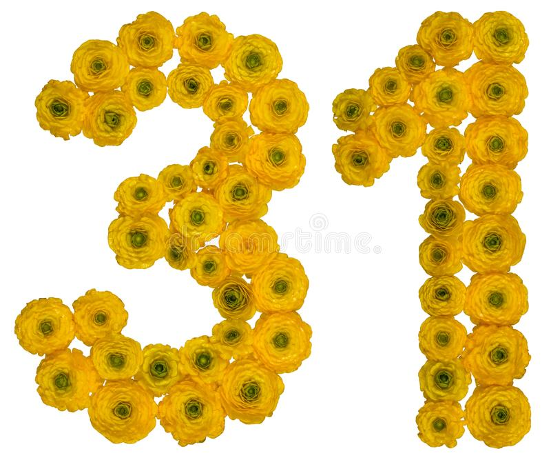 Arabic numeral 31, thirty one, from yellow flowers of buttercup, isolated on white background stock images