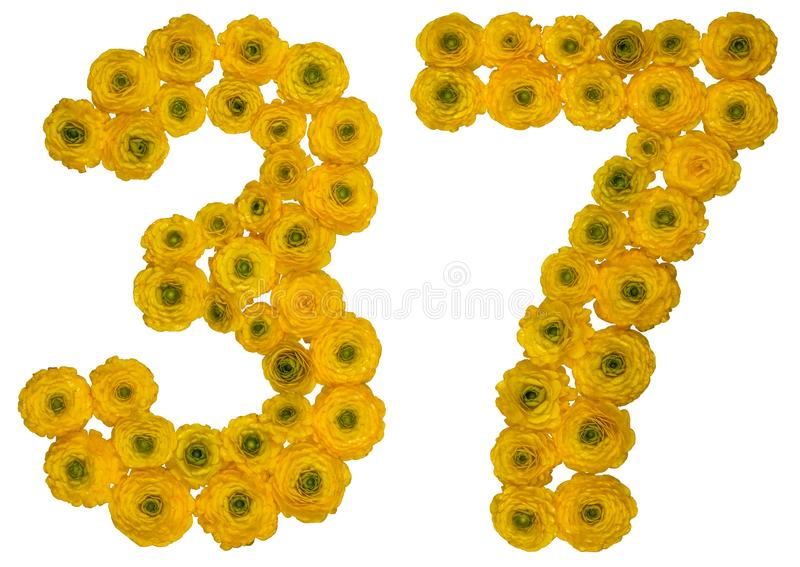 Arabic numeral 37, thirty seven, from yellow flowers of buttercup, isolated on white background stock photography