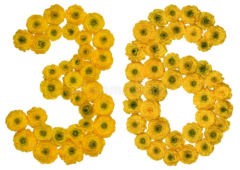 Arabic numeral 36, thirty six, from yellow flowers of buttercup, isolated on white background royalty free stock images