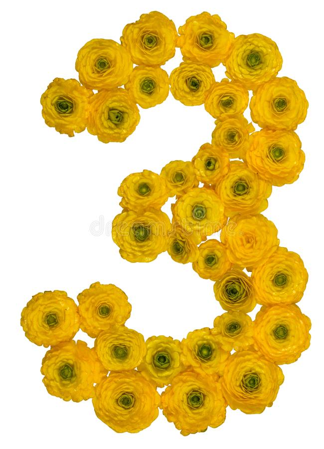 Arabic numeral 3, three, from yellow flowers of buttercup, isolated on white background royalty free stock photo