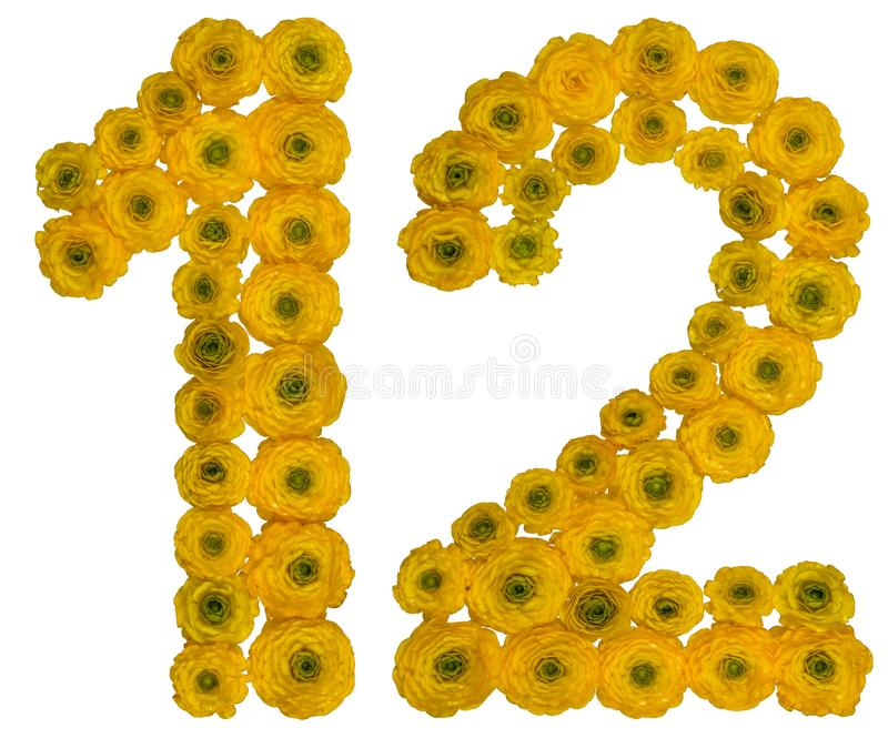 Arabic numeral 12, twelve, from yellow flowers of buttercup, is. Olated on white background stock photo