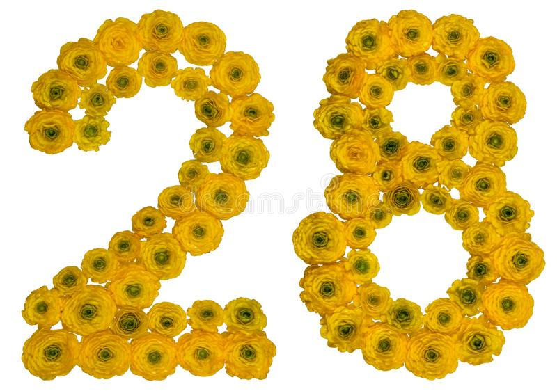 Arabic numeral 28, twenty eight, from yellow flowers of buttercup, isolated on white background royalty free stock images