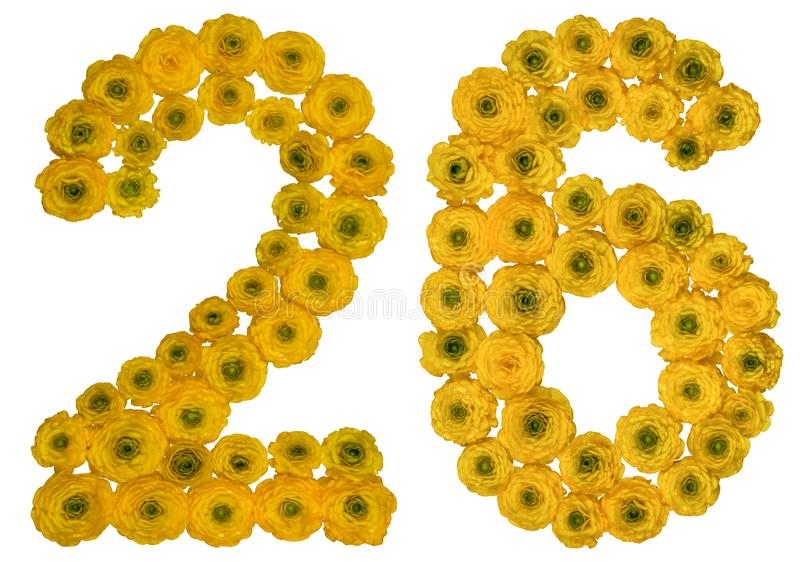 Arabic numeral 26, twenty six, from yellow flowers of buttercup, isolated on white background royalty free stock photos