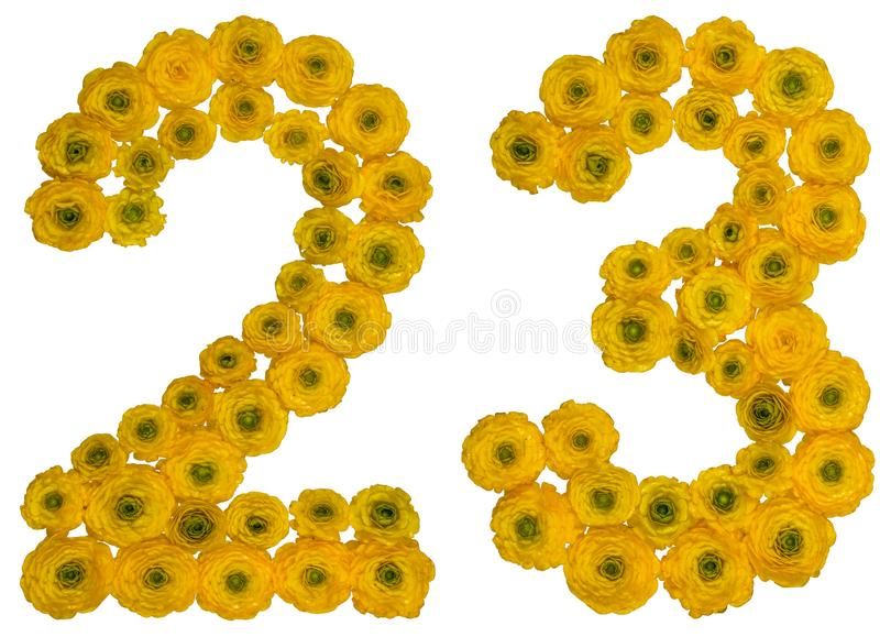 Arabic numeral 23, twenty three, from yellow flowers of buttercup, isolated on white background stock photo