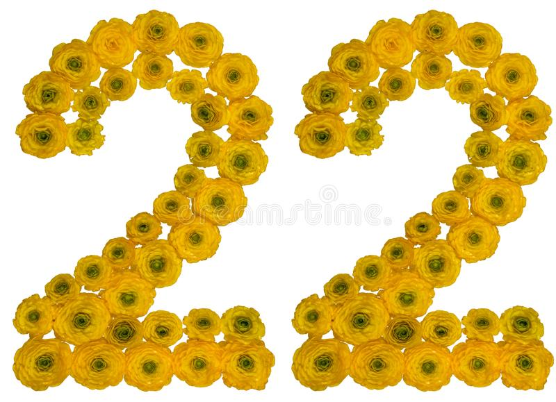 Arabic numeral 22, twenty two, from yellow flowers of buttercup, isolated on white background stock photo