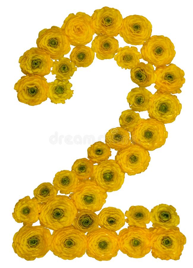 Arabic numeral 2, two, from yellow flowers of buttercup, isolate. D on white background royalty free stock photography