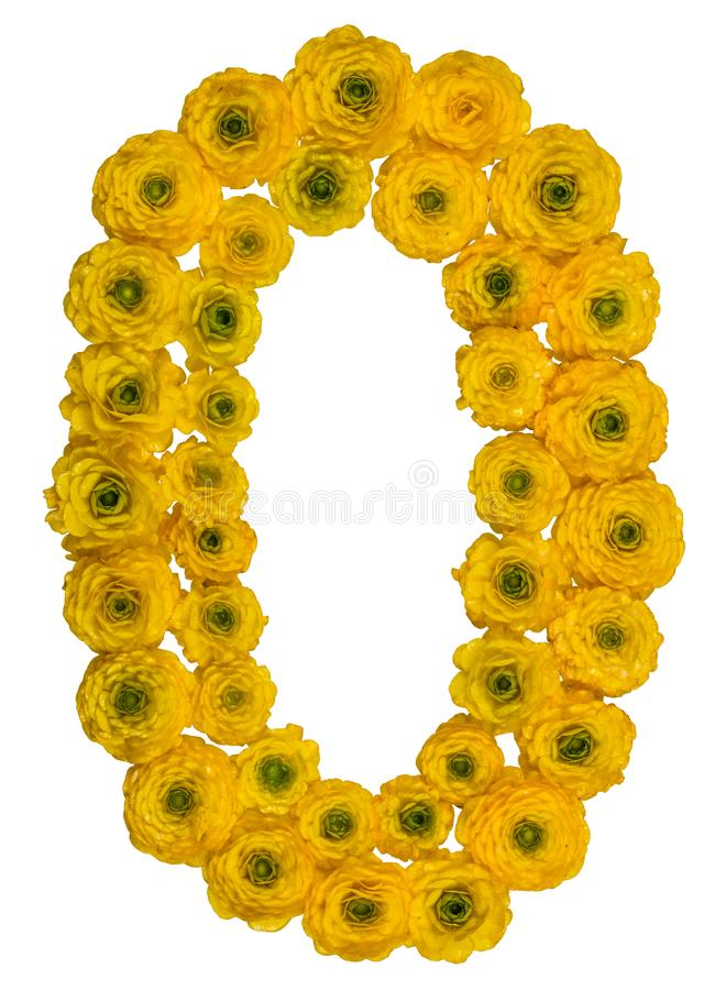 Arabic numeral 0, zero, from yellow flowers of buttercup, isolated on white background royalty free stock photo