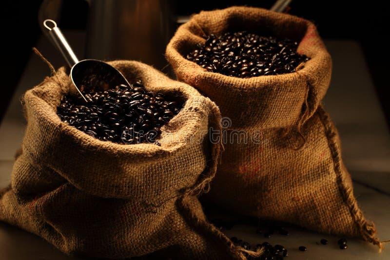 Arabica-Kaffee lizenzfreie stockfotografie
