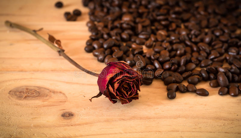 The arabica and robusta coffee beans, Selective focus, copy space, can be used as a background. Arabica and robusta coffee beans with sack bag and dried red rose royalty free stock photos