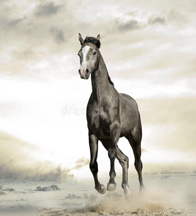 Arabisch paard in woestijn royalty-vrije stock afbeelding