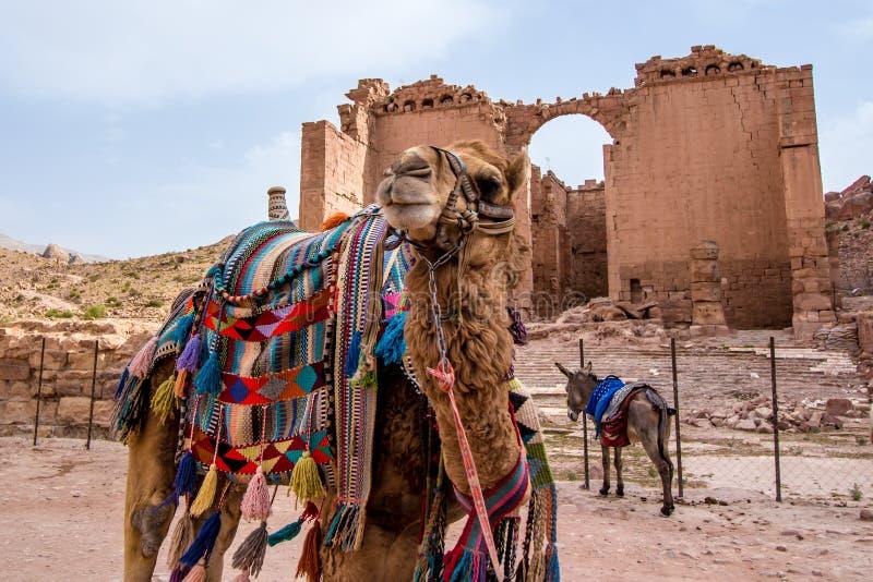Arabische kamelen in de oude stad van Petra, Jordanië royalty-vrije stock afbeeldingen