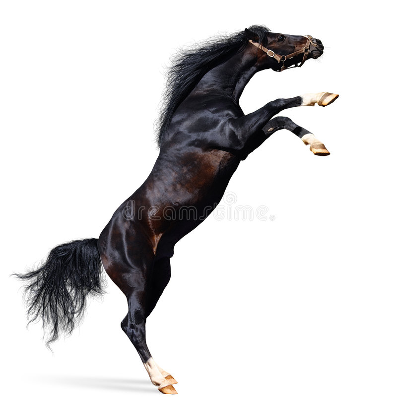 Arabische Pferdenrückseiten Lizenzfreie Stockfotos