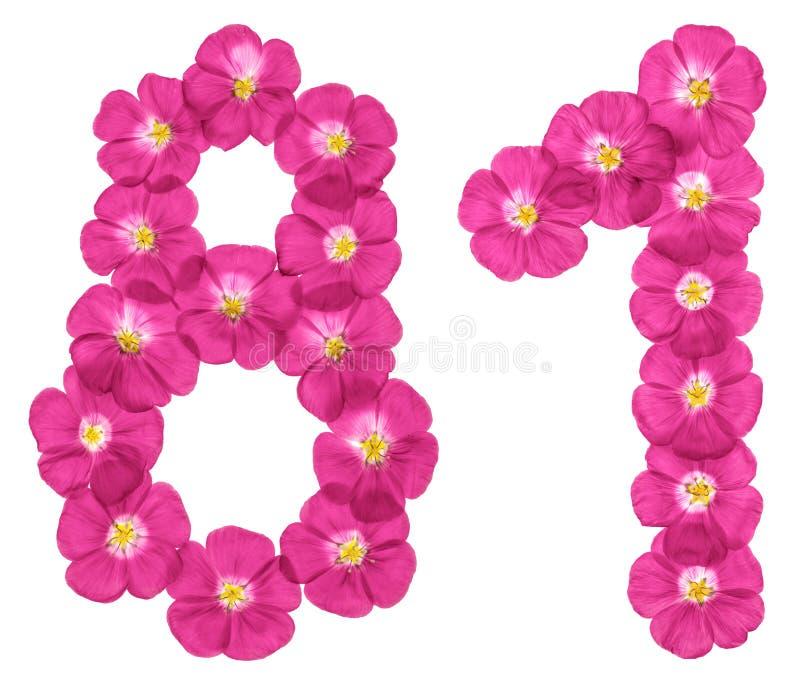 Arabische Ziffer 81, achtzig eins, von den rosa Blumen des Flachses, lokalisiert auf weißem Hintergrund lizenzfreie stockfotos
