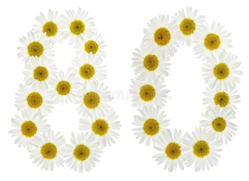 Arabische Ziffer 80, achtzig, von den weißen Blumen der Kamille, Isolator lizenzfreies stockfoto
