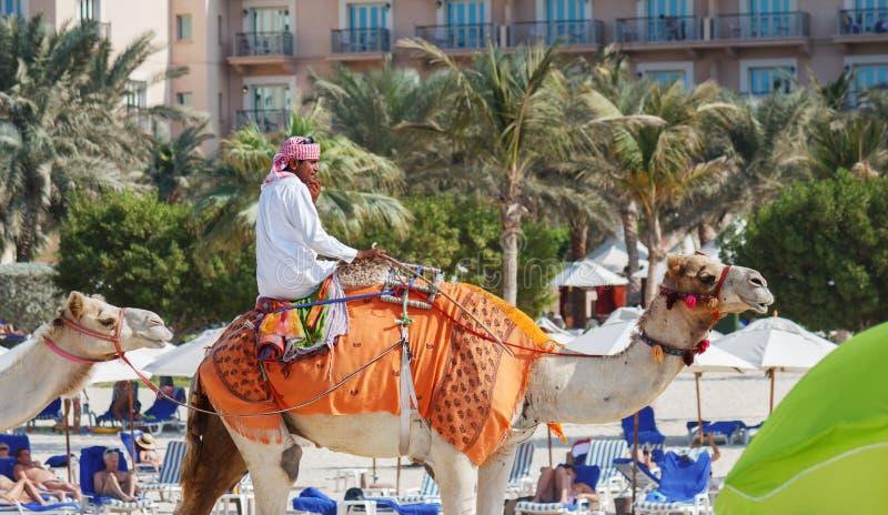 Arabischer Mann, der auf einem Kamel auf dem Strand in Dubai sitzt lizenzfreie stockfotos