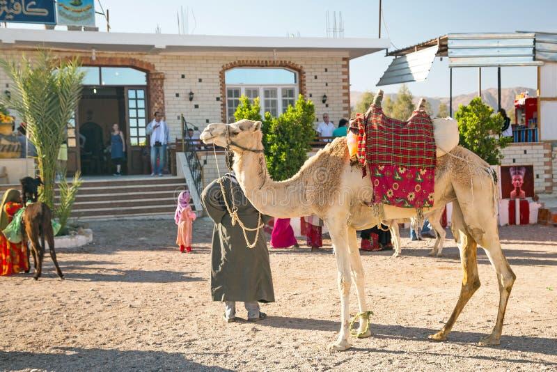 Arabischer Mann mit Kamel in Ägypten lizenzfreies stockfoto