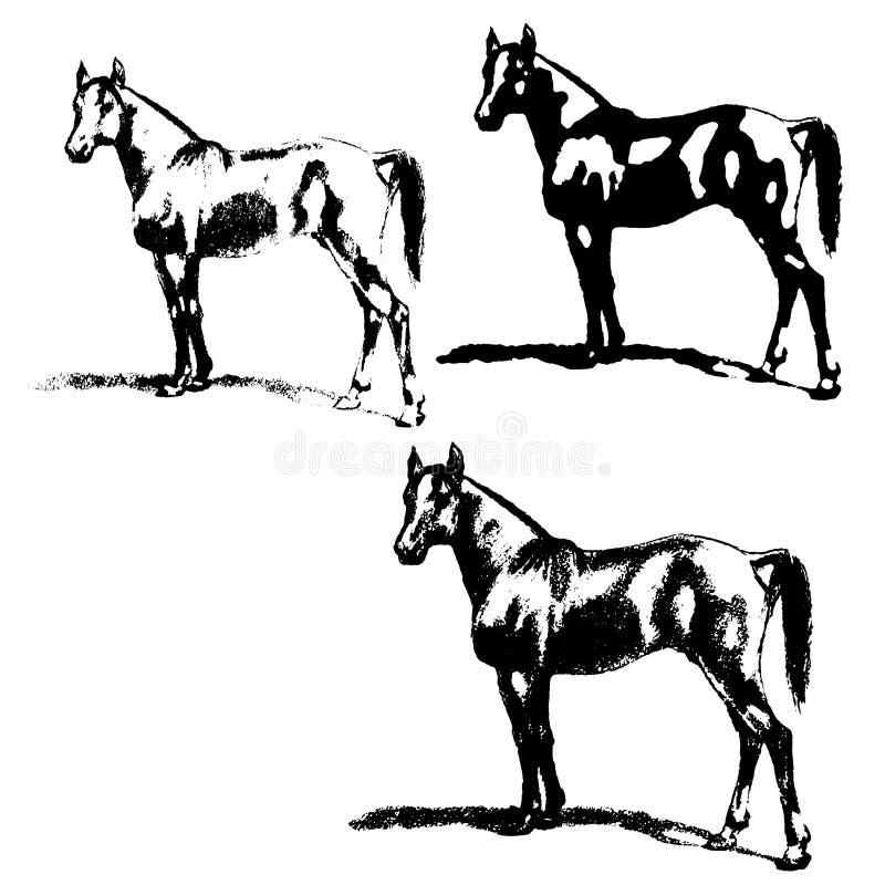 Arabisches Pferd, Hengst Set Schattenbilder lizenzfreie abbildung