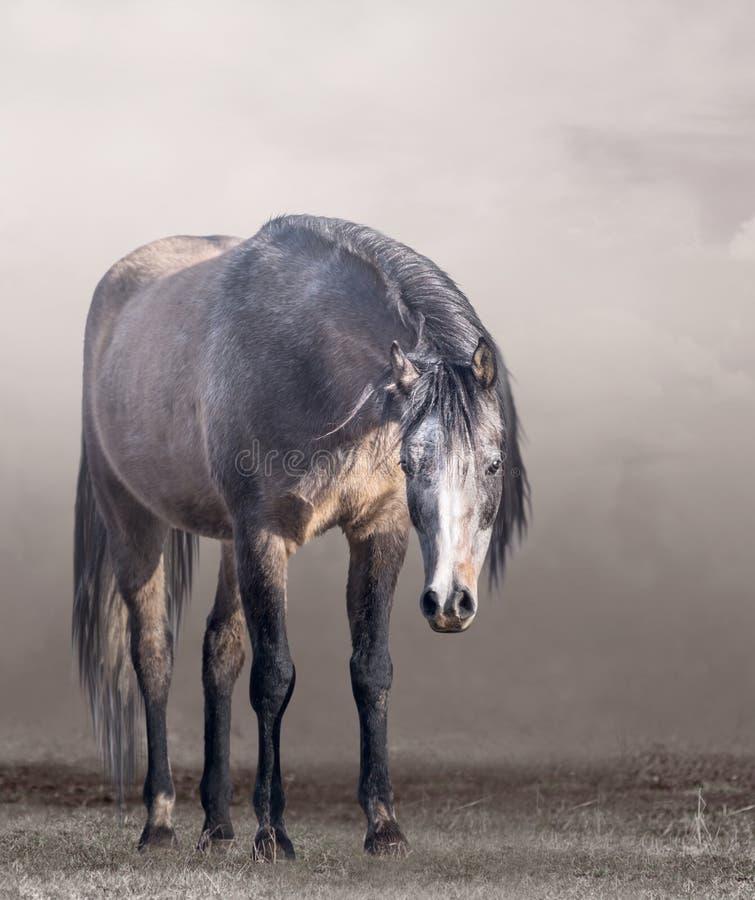 Arabisches Pferd im Nebel im wolkigen Wetter stockbild