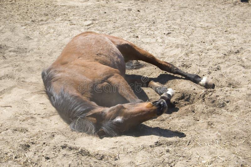 Arabisches Pferdenrollen lizenzfreie stockbilder