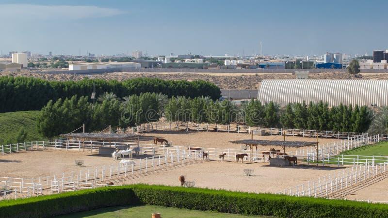 Arabisk paddock för hästkörningsinsida i hyperlapsen för dammökentimelapse, UAE arkivbild
