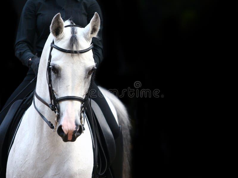 arabisk ryttarewhite royaltyfria bilder