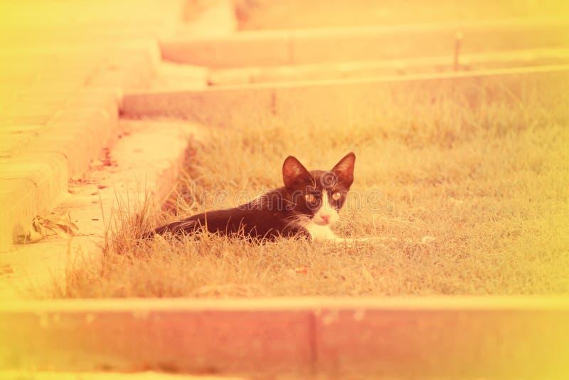 ARABISKA EMIRATER FÖR DUBAI-UNITED PÅ 21 JUNI 2017 Behandla som ett barn katten som ser kameran som isoleras, closeup royaltyfri fotografi