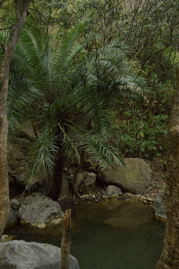 Arabiskt träd med dammet arkivbild