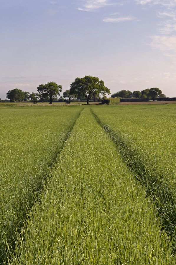 Arable Farm Crop Stock Image. Image Of Tree, Crop