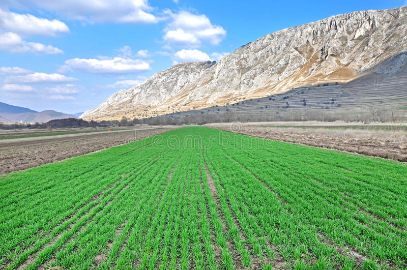 Arable field at spring royalty free stock images