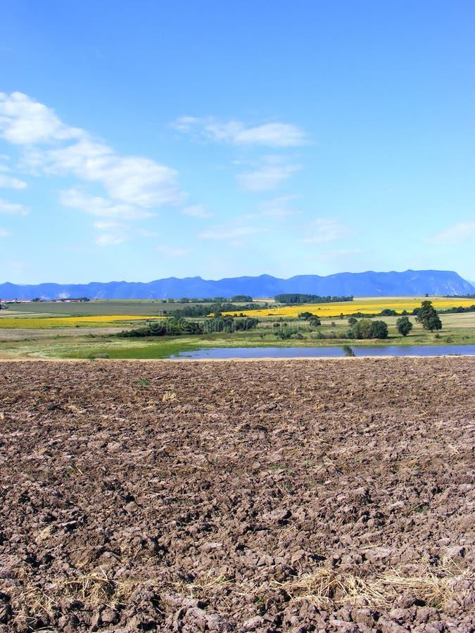 Arable land