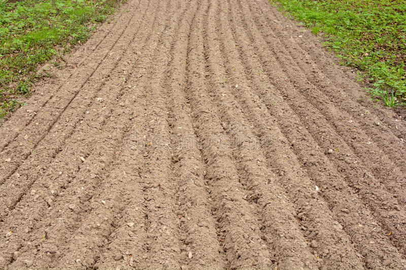 Arable land in the lane for landing. Arable land dug up for planting straight strip royalty free stock image