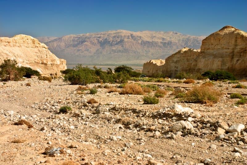 arabska pustynia obraz royalty free