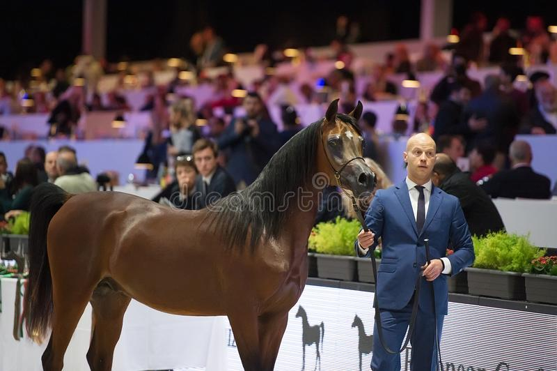 Arabski koński światowy mistrzostwo, Nord Villepente w Paryż Pari zdjęcia stock