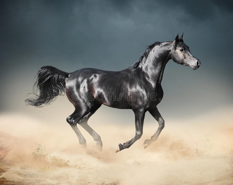 Arabski koński bieg w pustyni zdjęcia stock