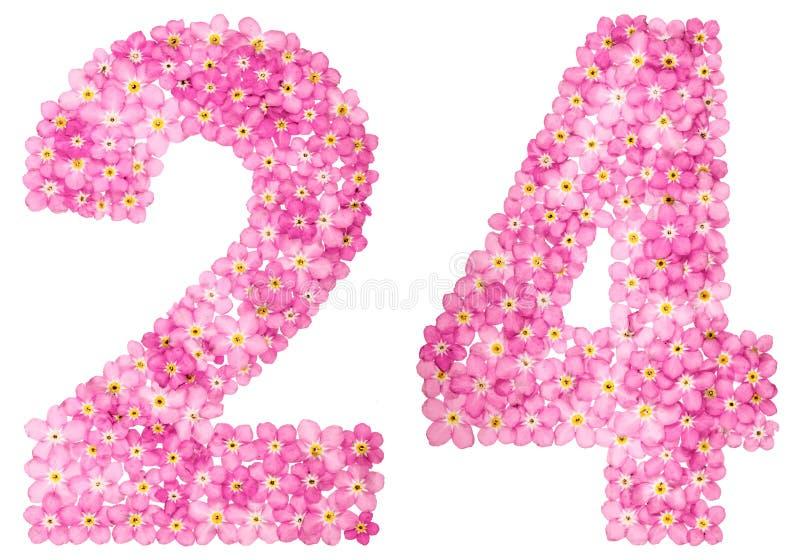 Arabski liczebnik 24, dwadzieścia cztery, od różowych niezapominajkowych kwiatów, ilustracji