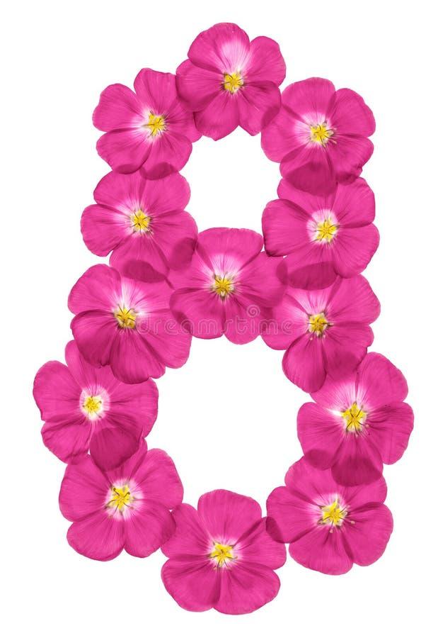 Arabski liczebnik 8, osiem, różowi kwiaty len, odizolowywający na białym tle zdjęcie royalty free