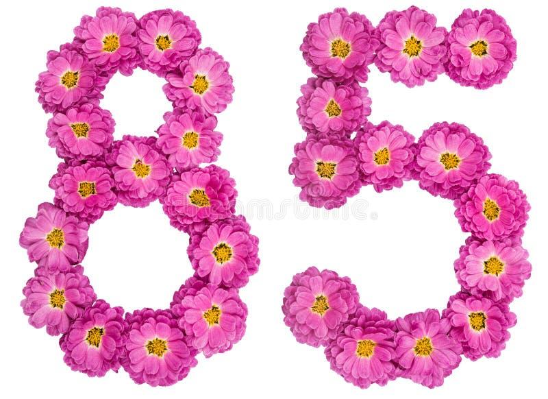 Arabski liczebnik 85, osiemdziesiąt pięć, od kwiatów chryzantema, i zdjęcie stock