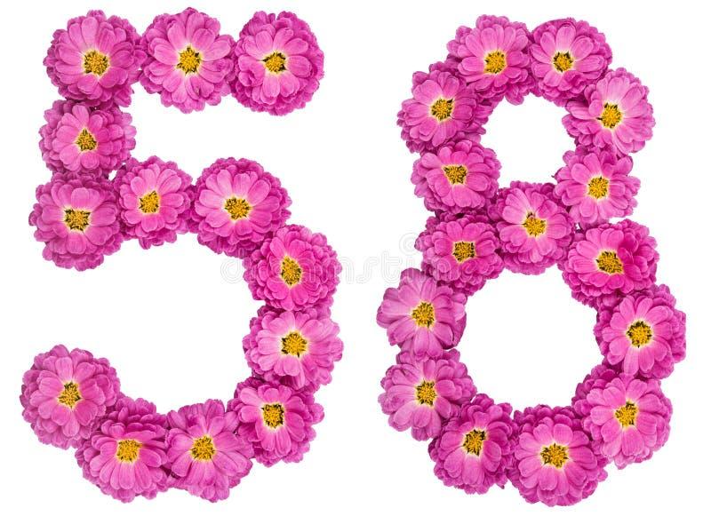 Arabski liczebnik 58, pięćdziesiąt osiem, od kwiatów chryzantema, i fotografia royalty free