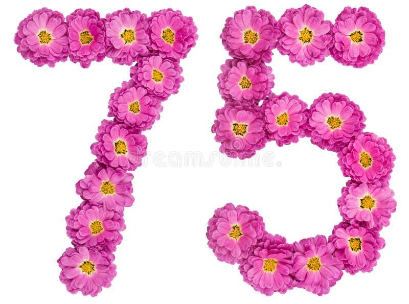 Arabski liczebnik 75, siedemdziesiąt pięć, od kwiatów chryzantema, fotografia royalty free