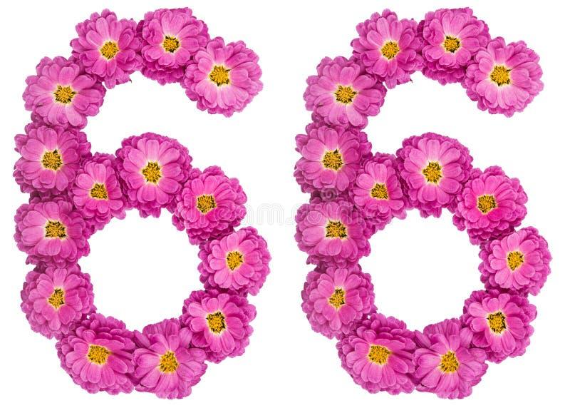 Arabski liczebnik 66, sześćdziesiąt sześć, od kwiatów chryzantema, iso zdjęcie royalty free