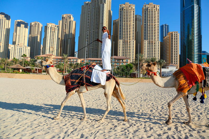 Arabski mężczyzna obsiadanie na wielbłądzie na plaży w Dubaj obrazy stock