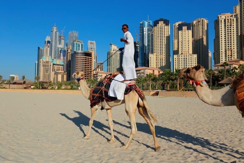 Arabski mężczyzna obsiadanie na wielbłądzie na plaży w Dubaj zdjęcie royalty free